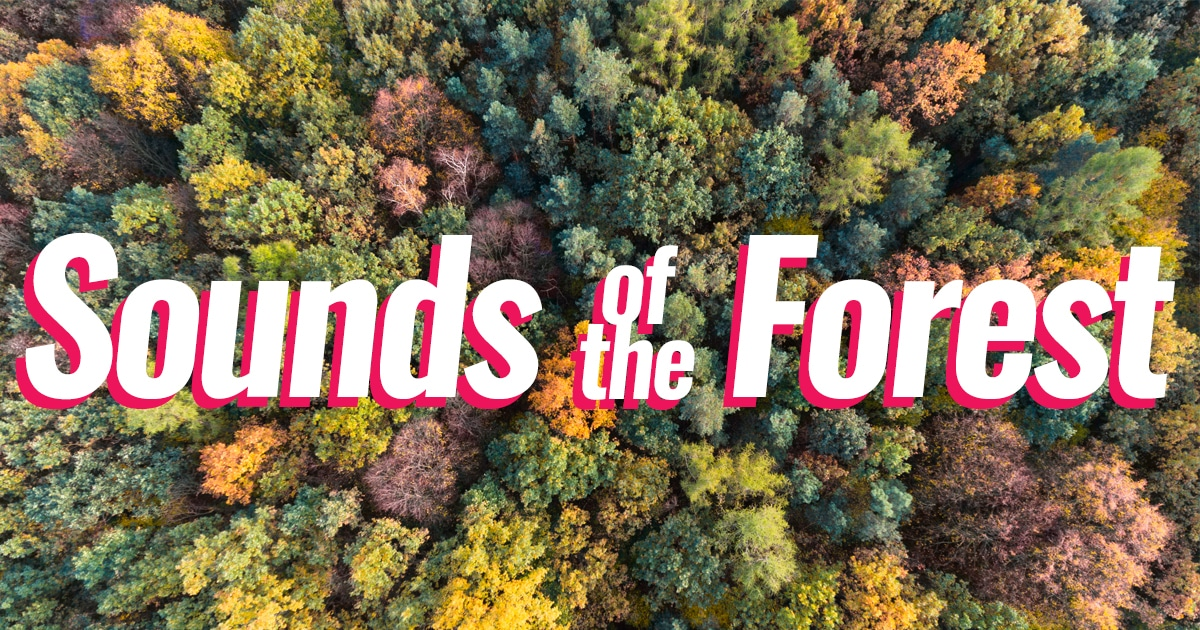 Sounds-of-the-forest-soundmap-thumbnail