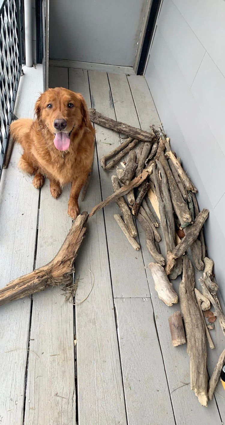 Bruce the Golden Retriever Stick Collection