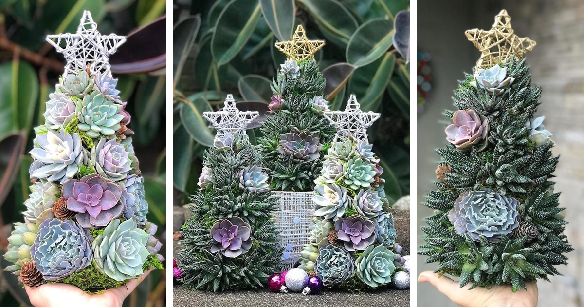 Succulent Christmas Trees Are A Festive Alternative To Conifers