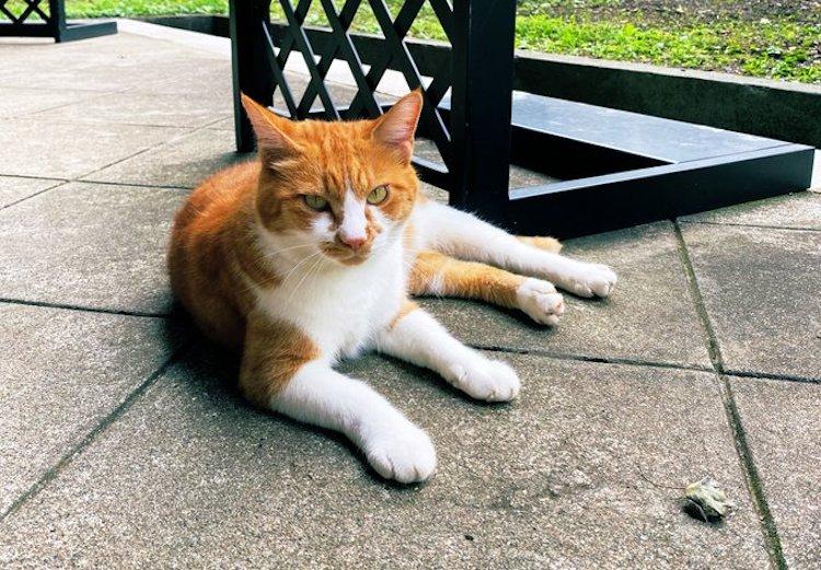 Zen Garden Cat