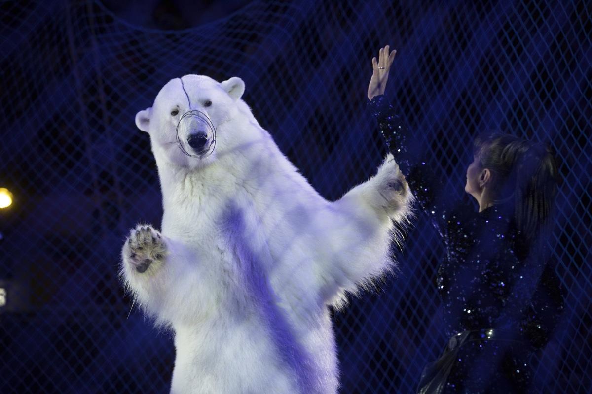 Polar Bear in Ice Skating Performance