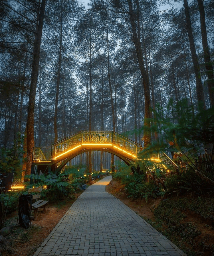 Sky Bridge in Cikole Orchid Forest in Indonesia