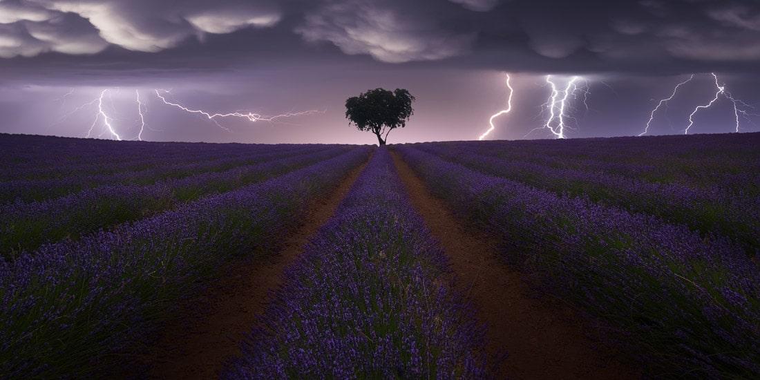 Lightning Over a Lavender Field