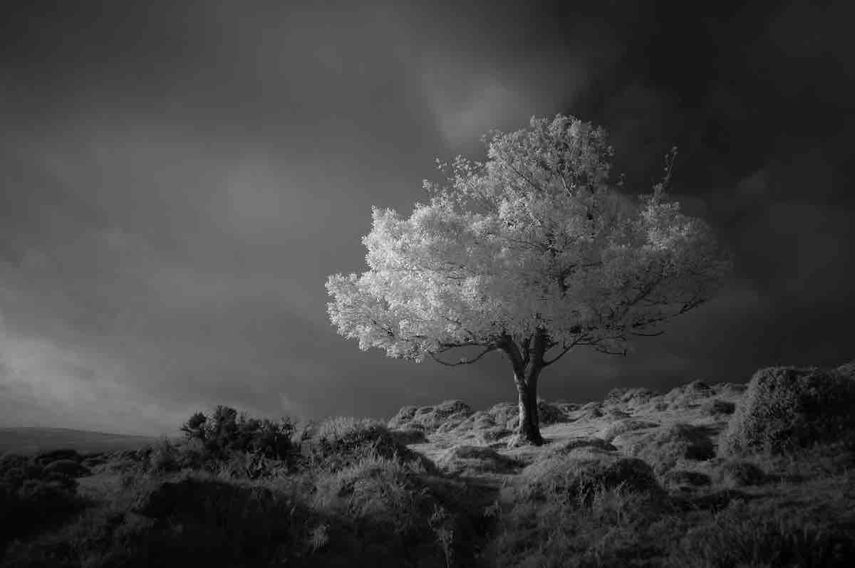 Black and White Image of a Lone Tree