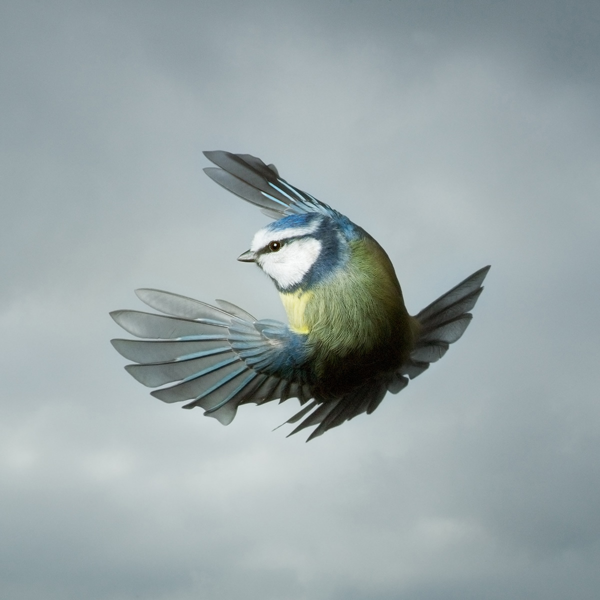 Mark Harvey Photography In Flight