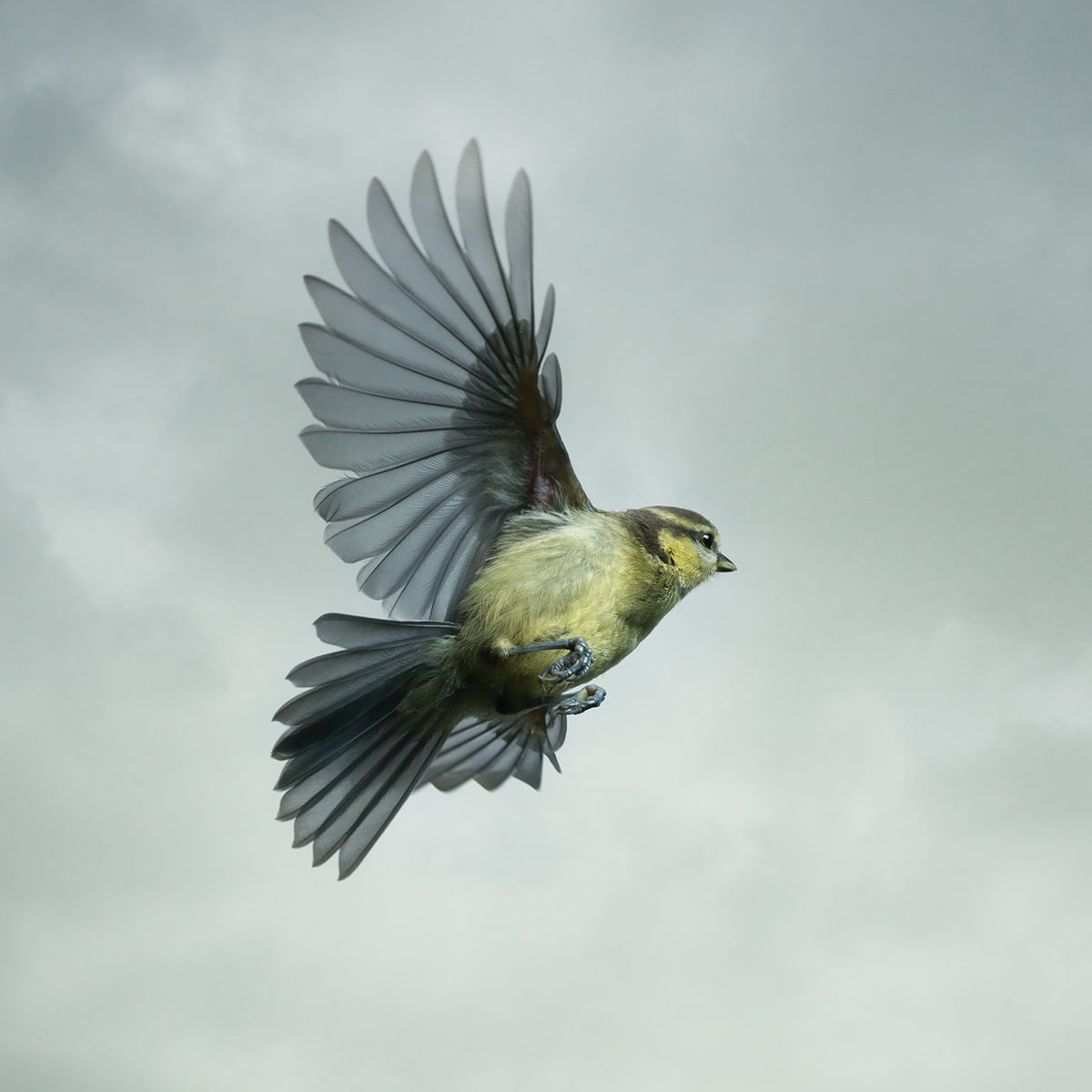 Mark Harvey Photograph Blue Tit