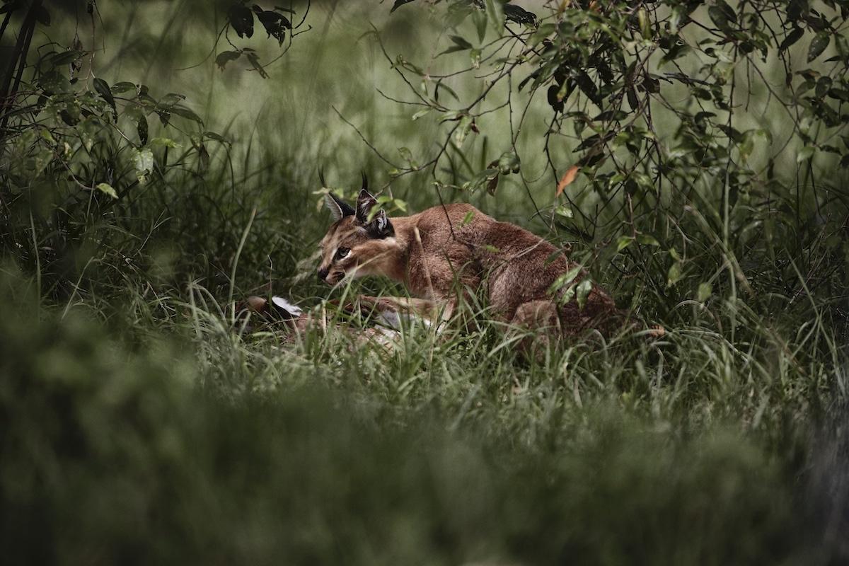 Wildlife Photography by Uri and Helle Løvevild-Golman