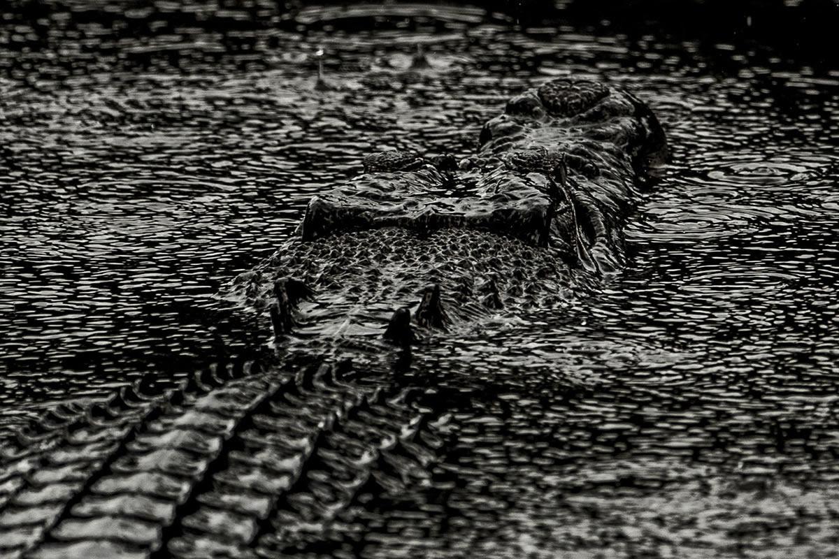 Crocodile by Uri and Helle Løvevild-Golman