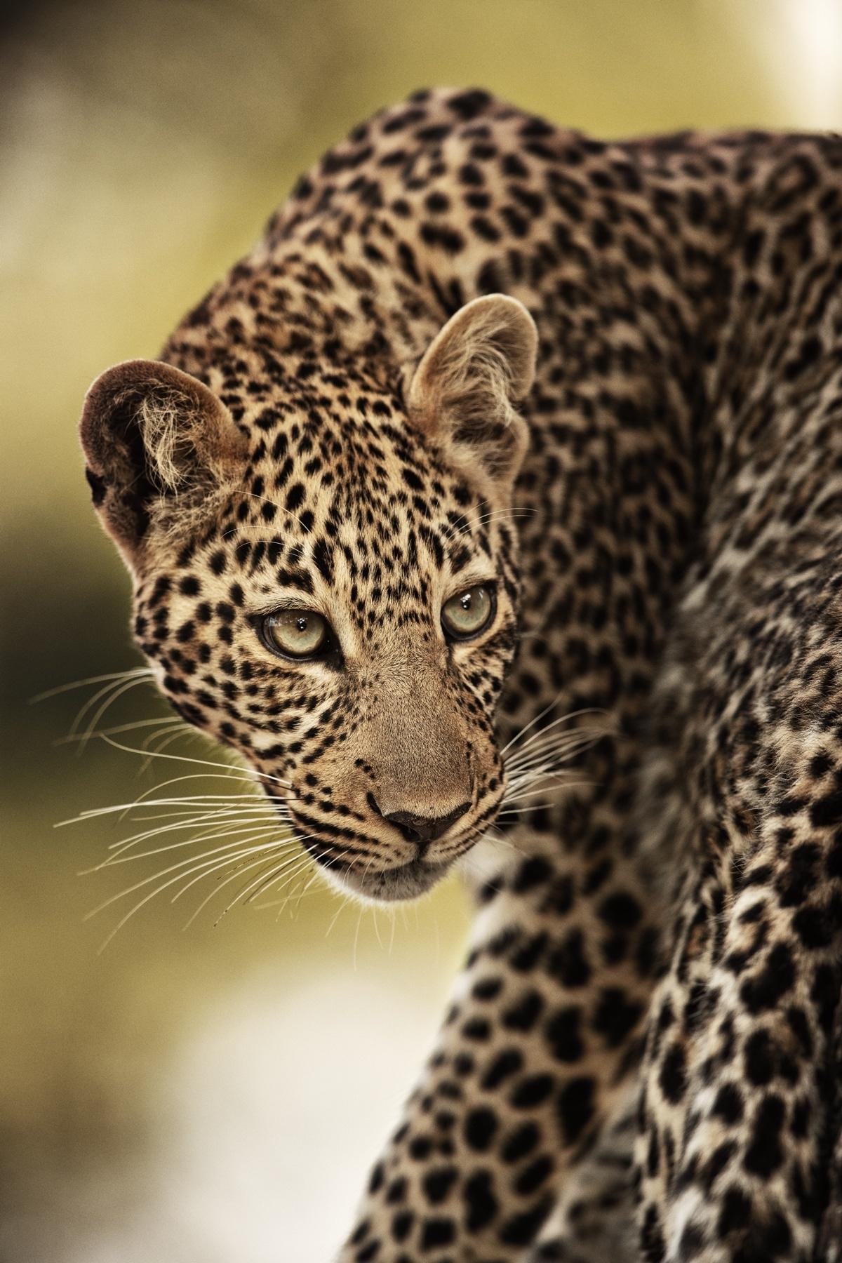 Exotic Wildlife by Uri and Helle Løvevild-Golman