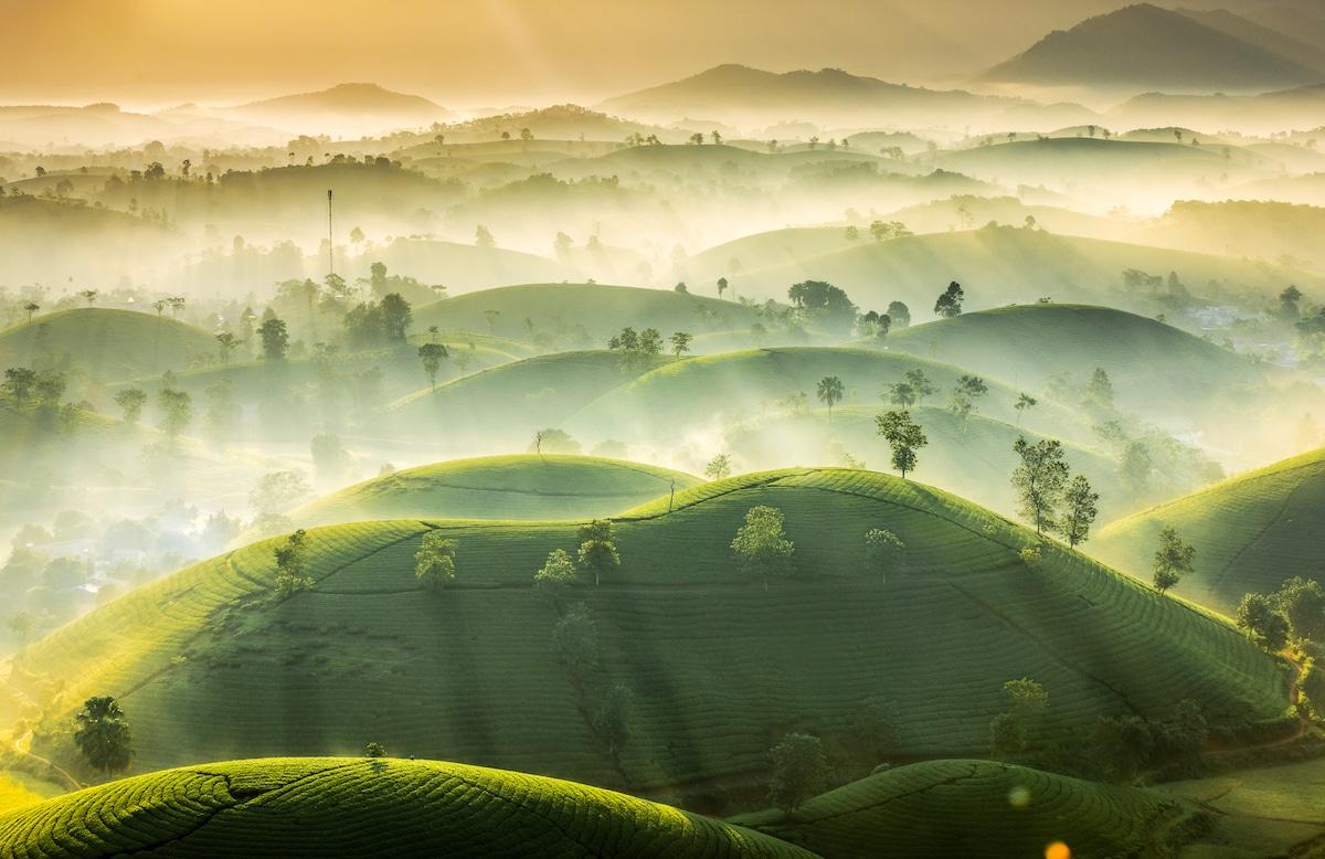 Long Coc tea hill in Vietnam