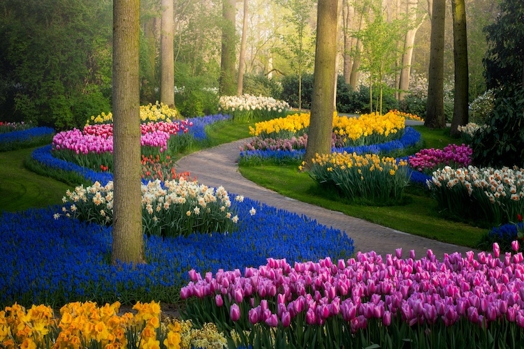 Keukenhof Tulip Garden by Albert Dros