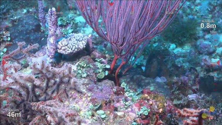descubrimiento de arrecife de coral