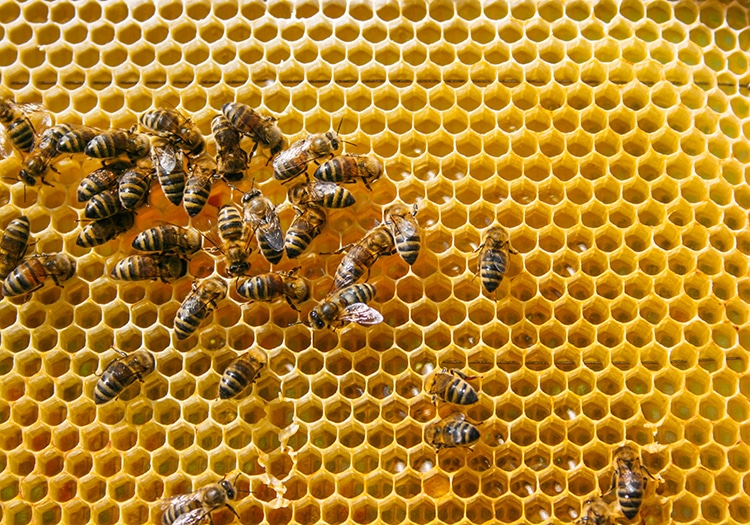 Beehive With Worker Bees