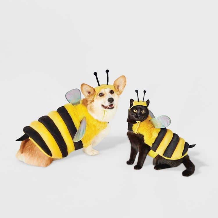 Disfraz de abeja para mascotas