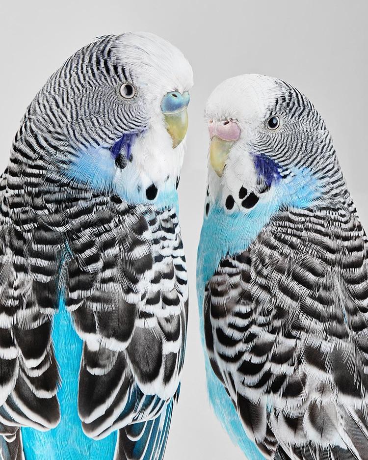 Bluey and Liquorice