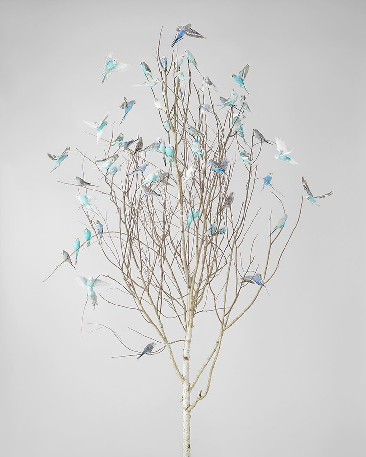 Blue Blossoms 2