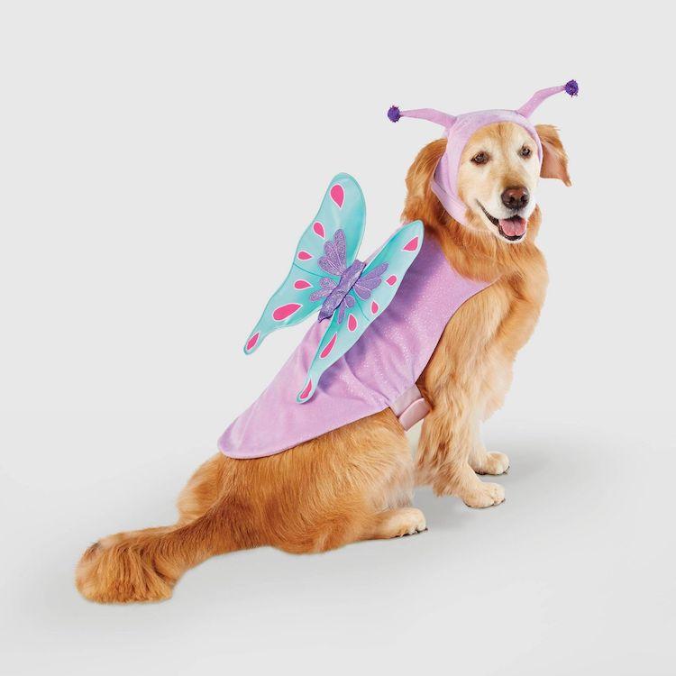 Disfraz de mariposa para perro