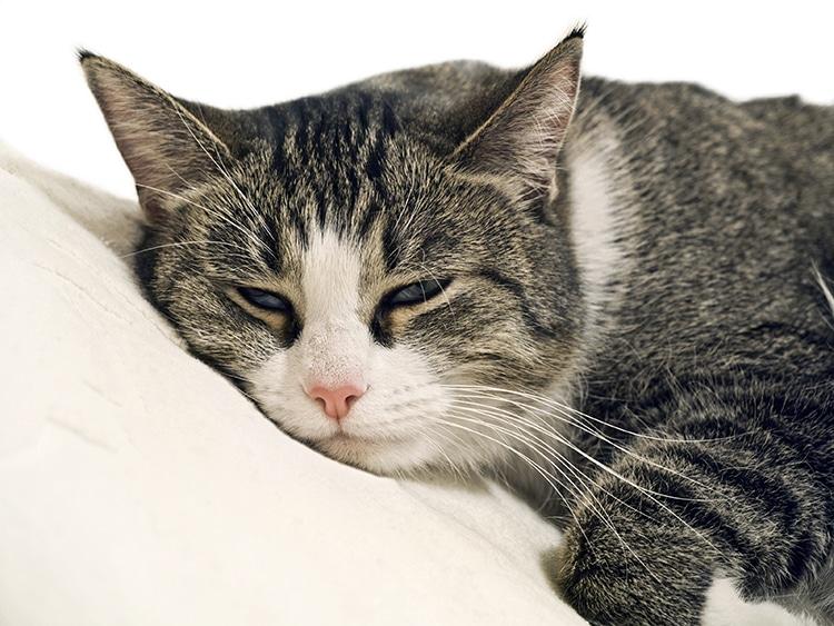 Cat Eye-Movements