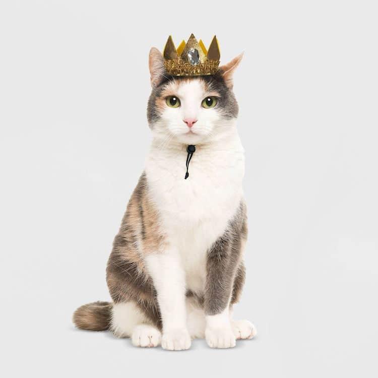 Corona para gato