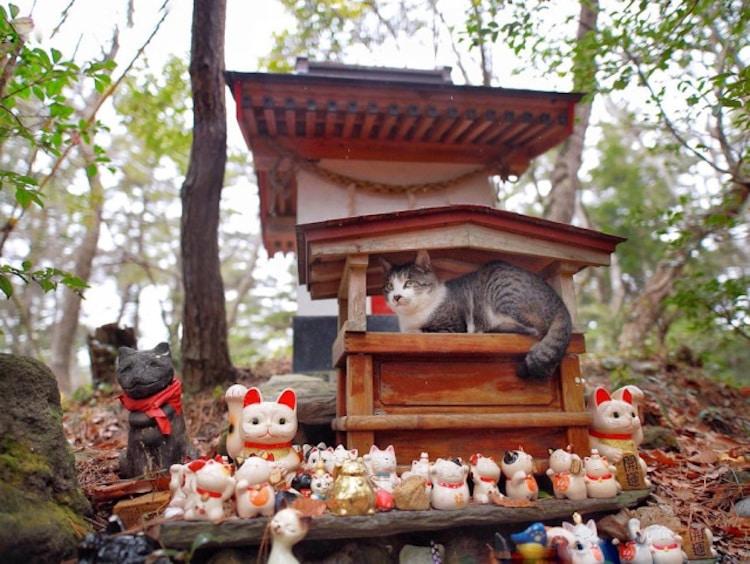 santuario de gatos en japon