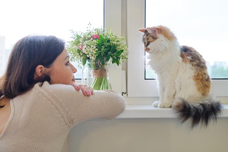 Parpadeo lento para comunicarte con tu gato