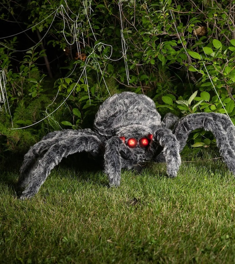 Scary Furry Spider That's Larger Than Life