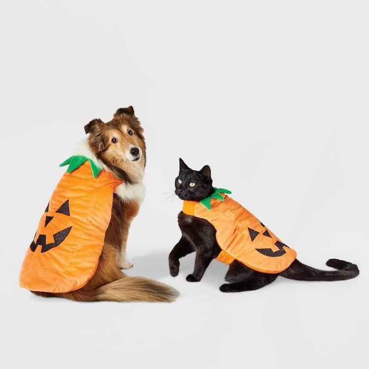 Disfraz de calabaza para perro y gato