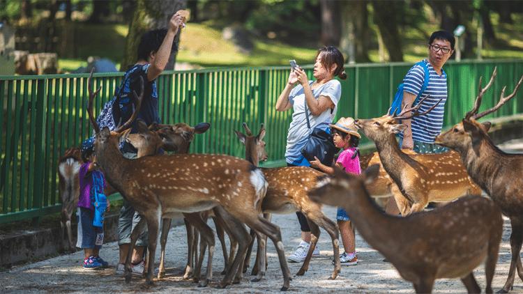 Turistas en Nara, Japon