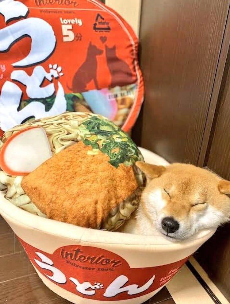 Shiba Inu duerme en cama de ramen