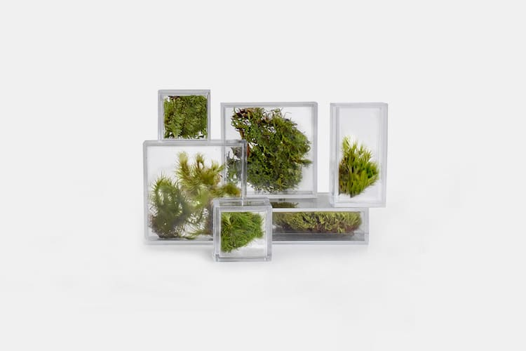 Tiny Terrariums for home and office