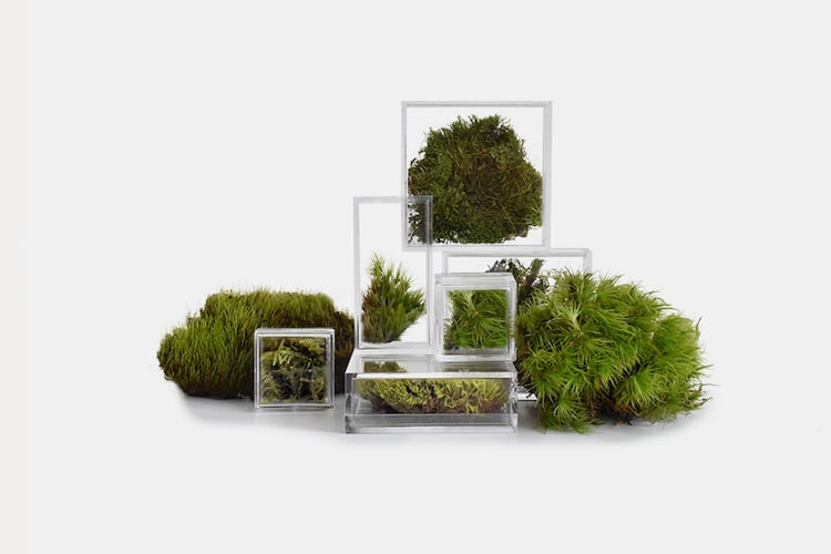 Tiny moss terrariums for home and office