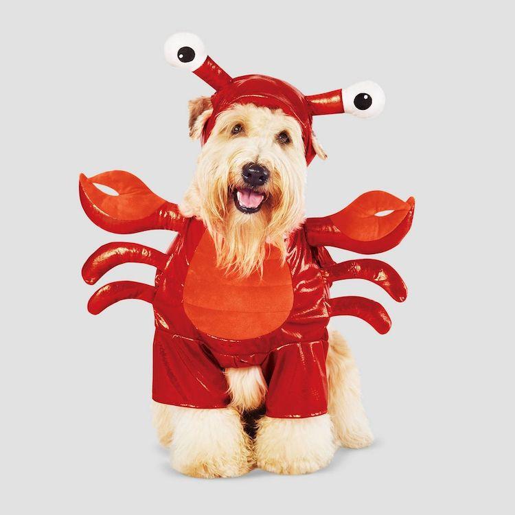 Disfraz de langosta para perro