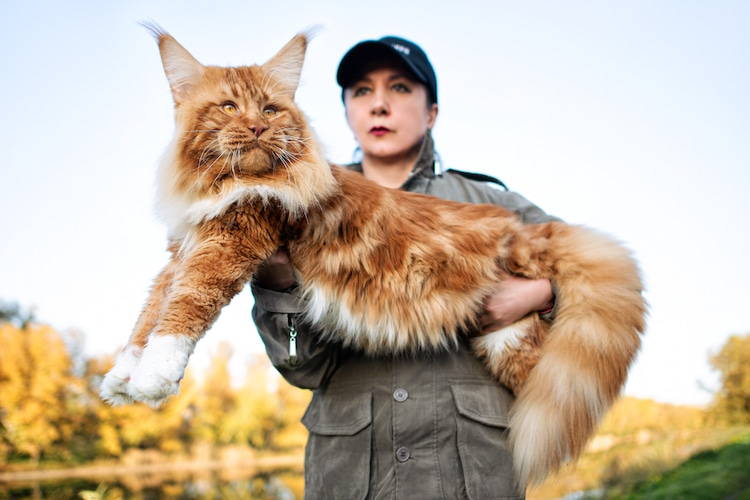 mujer con Maine Coon