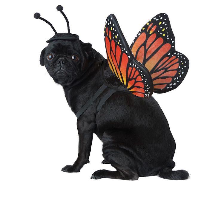 Disfraz para perro de mariposa monarca