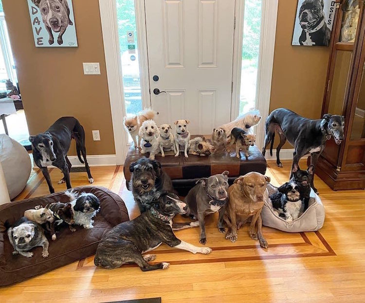 The Mr. Mo Project give Elderly and disabled dogs a home for life