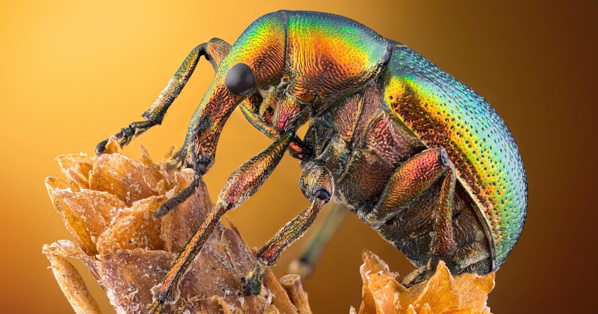 Marvel at Life Under the Microscope With the Winners of the Nikon Small World Photo Contest