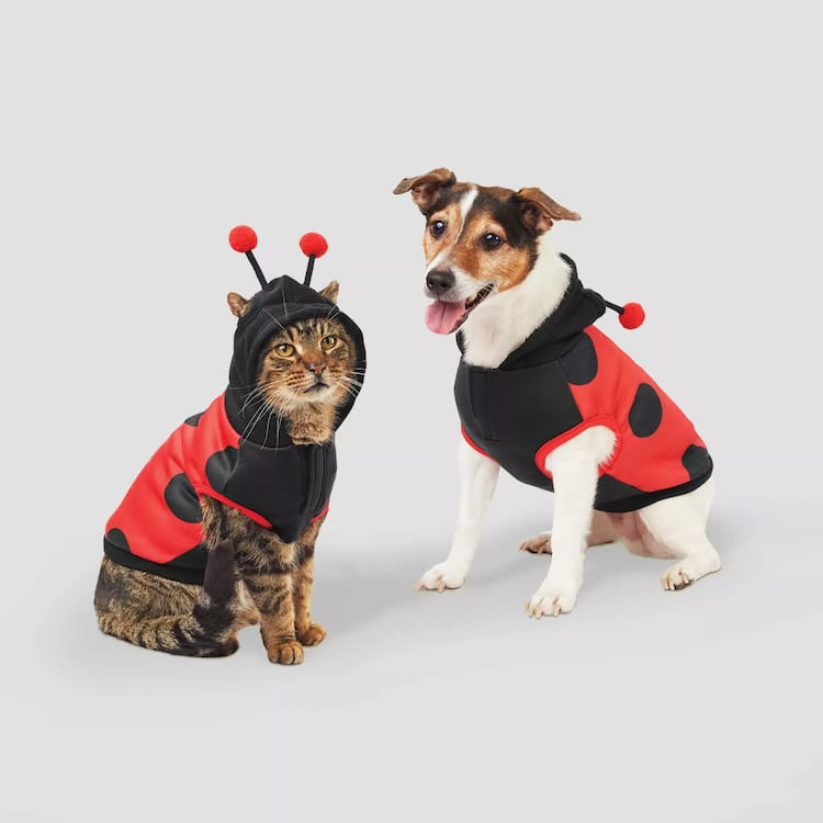 Disfraces de mariquita para perros y gatos