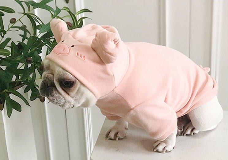 Disfraz de cerdo para mascota