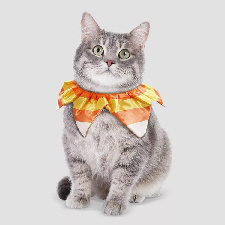Disfraz de maíz dulce para gato