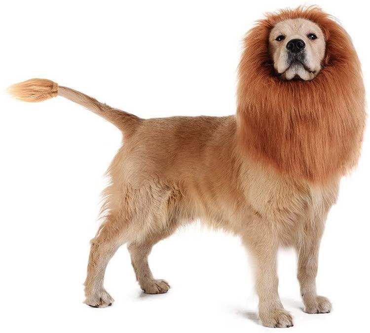 Melena de león para perro