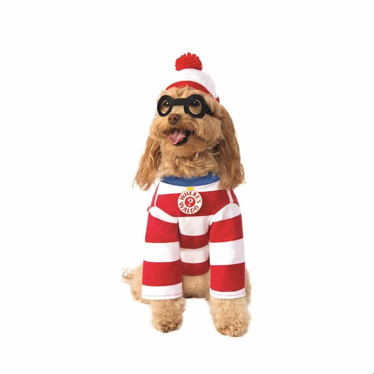 Where's Waldo Dog Halloween Costume