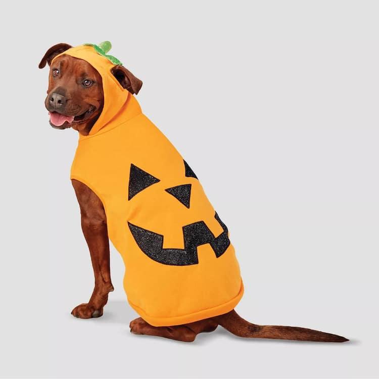 Sudadera de calabaza para mascota