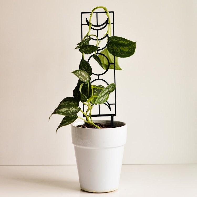 Trellis for Indoor Plant