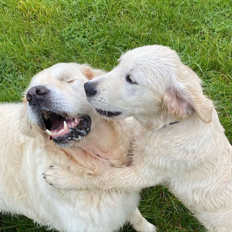Blind Dog and Puppy