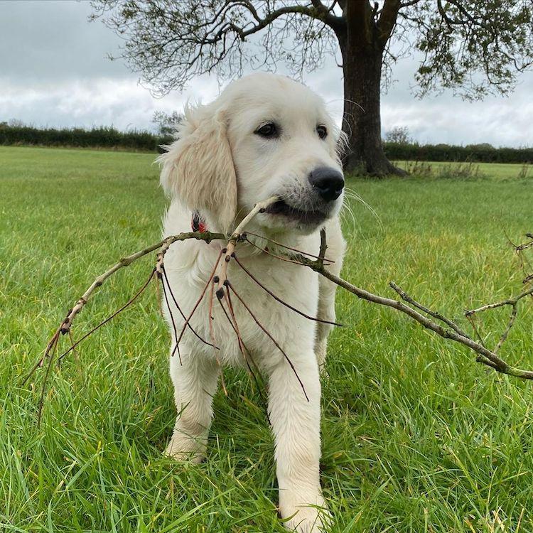 Oko the Puppy