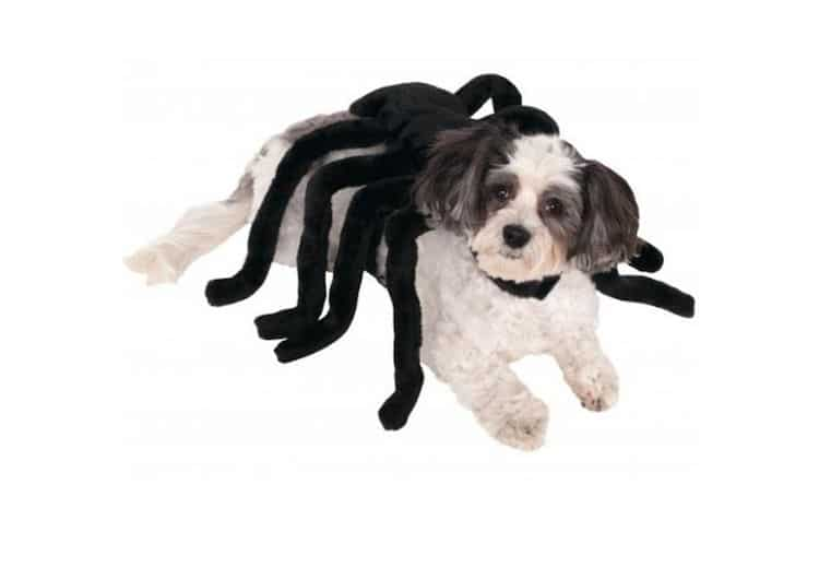 Disfraz de araña para perro