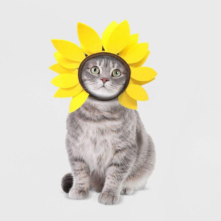 Disfraz de girasol para gato