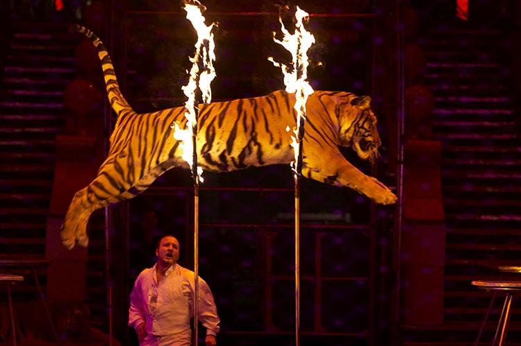 Tiger Show Circus