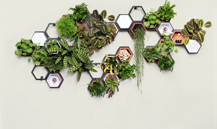 Large Modular Living Wall