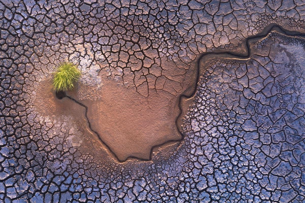 Planta creciendo rodeada de tierra seca
